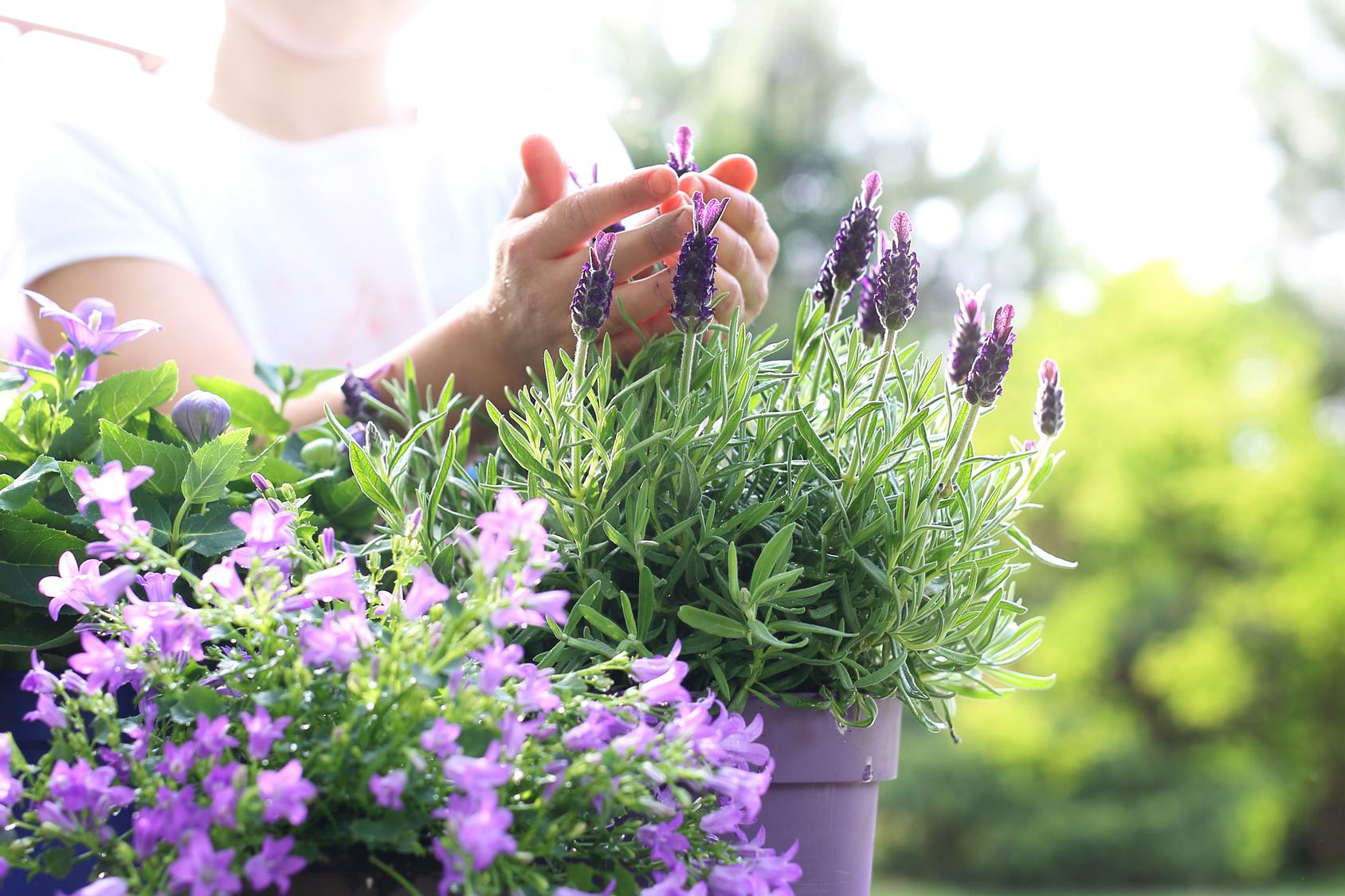 Fiori Tappezzanti Per Aiuole dry gardening: le piante che chiedono poca acqua - gesal.it