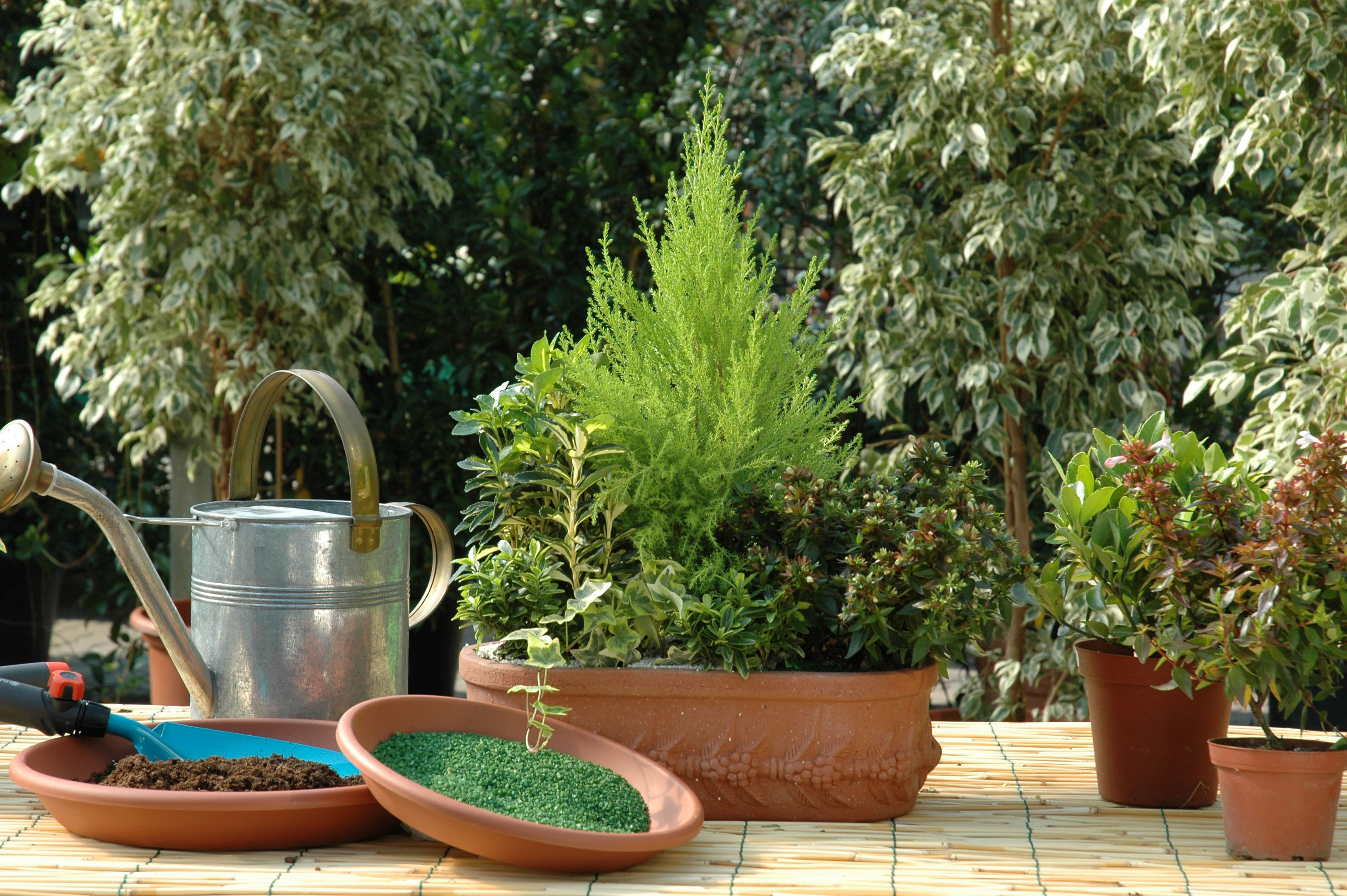 Composizione Vasi Da Balcone fiori e piante sul balcone in inverno: idee e consigli