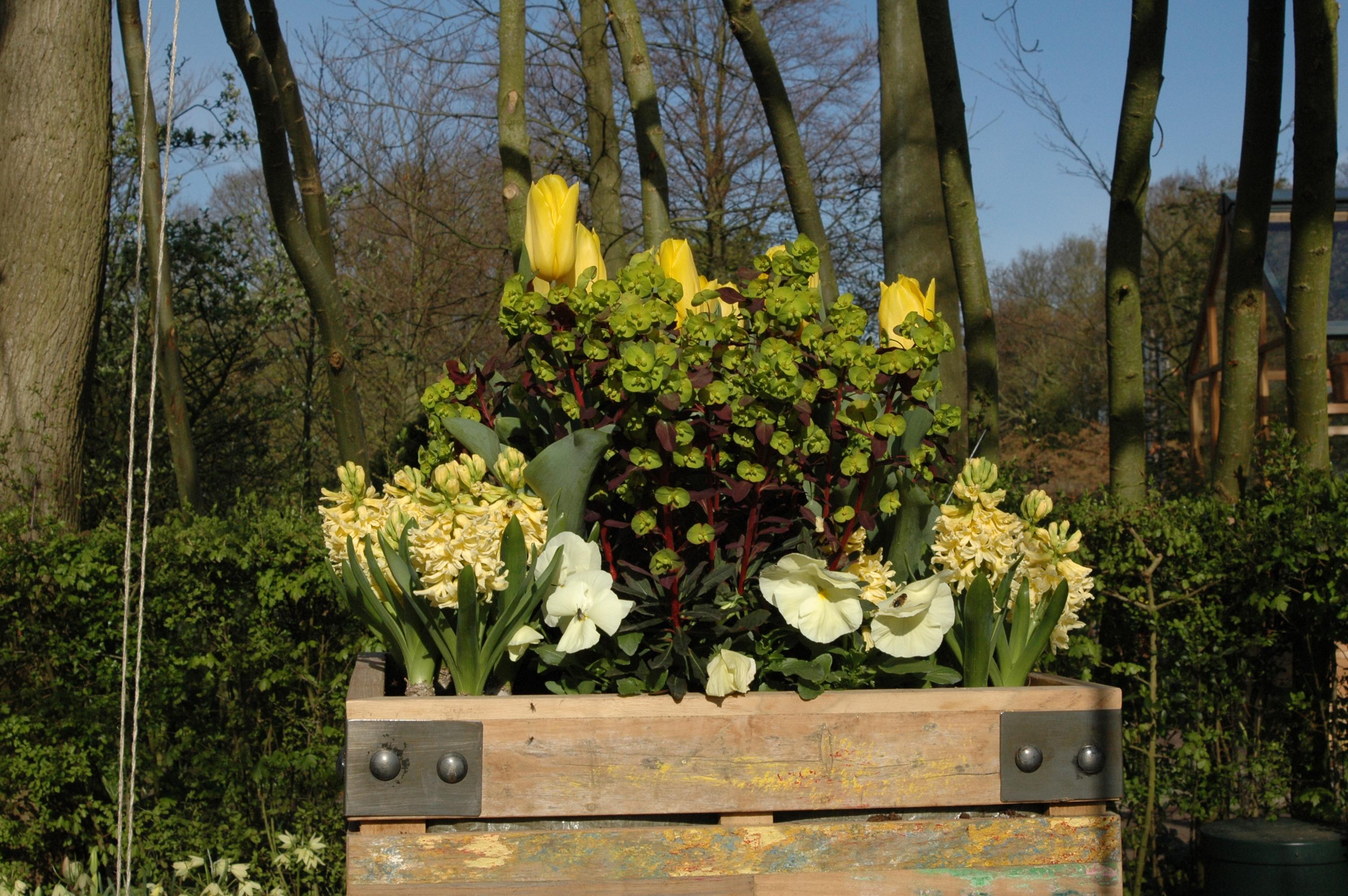 Composizione Vasi Da Balcone composizioni di fiori e piante primaverili - gesal.it