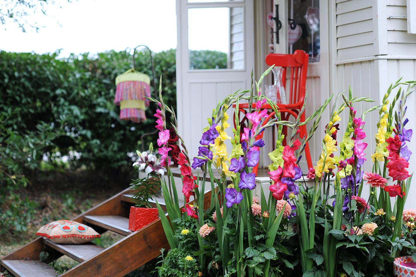 Quali Bulbi Piantare In Primavera bulbi a fioritura estiva: quali scegliere - gesal.it