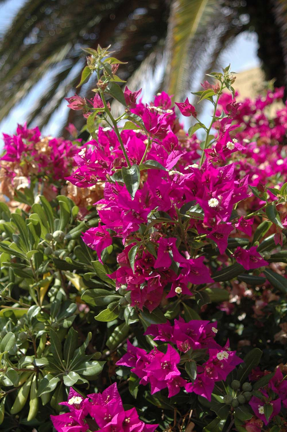 Rampicanti Che Crescono All Ombra piante rampicanti: quale scegliere? - gesal.it