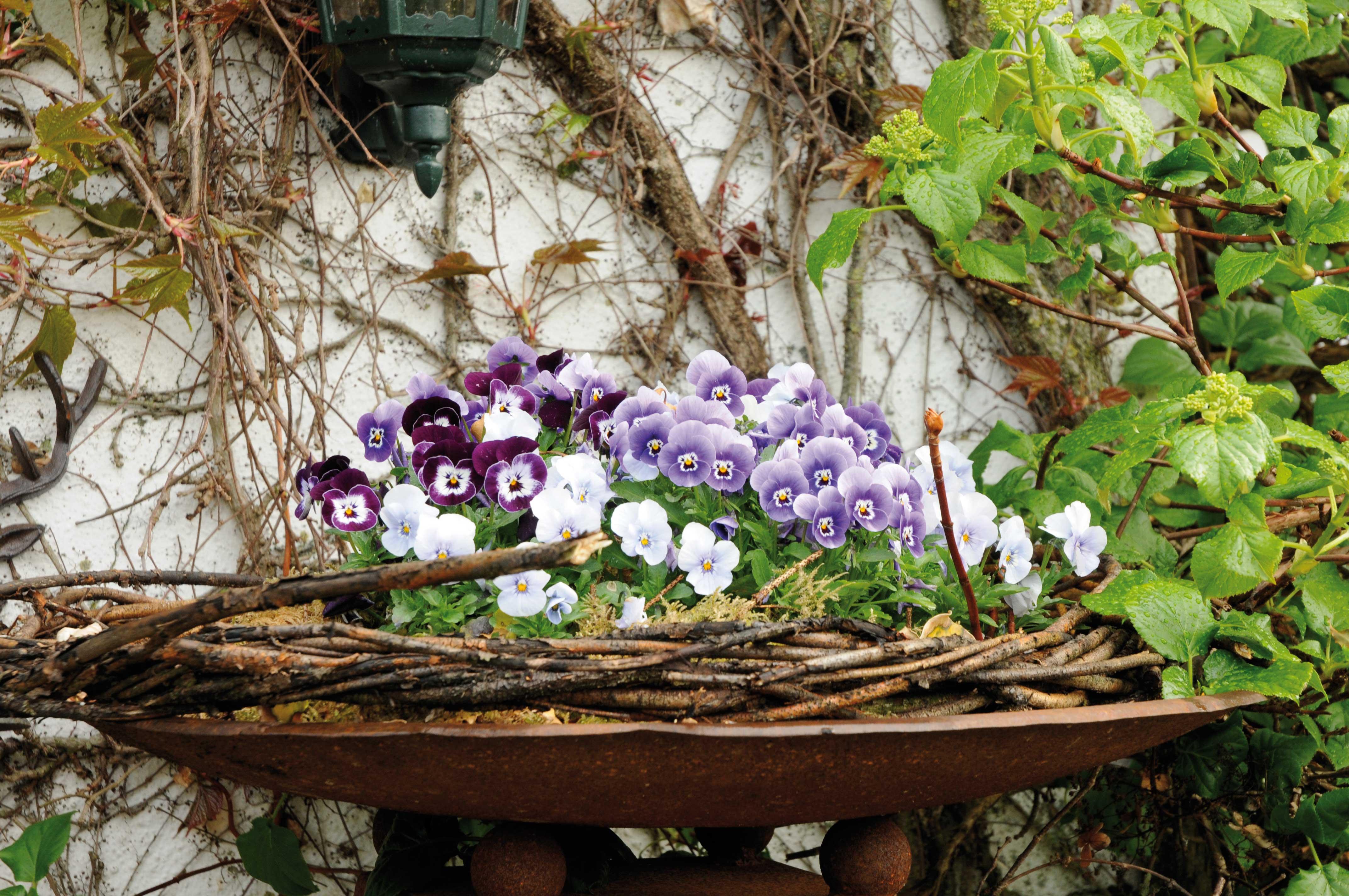 Pianta Ornamentale Con Bacche Rosse erica, solanum, hebe e altre belle piante per l'inverno